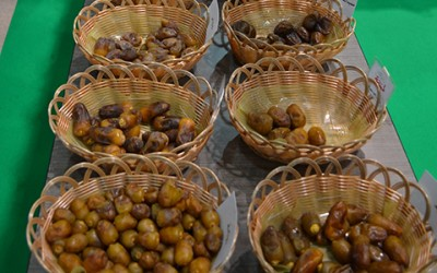 Date Palm Festival 2012